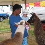 Chey and llamas