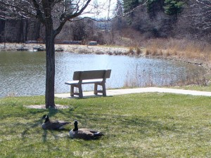 A pair of geese by a pond outside the conference building. Click the image for a larger version.